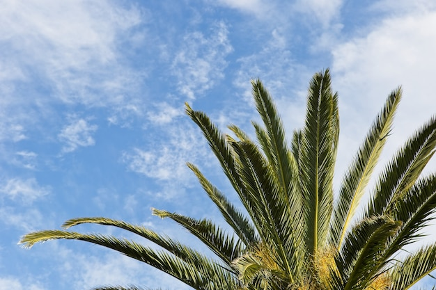 青い空の雲の下にある壮大なヤシの木のローアングルショット 無料写真