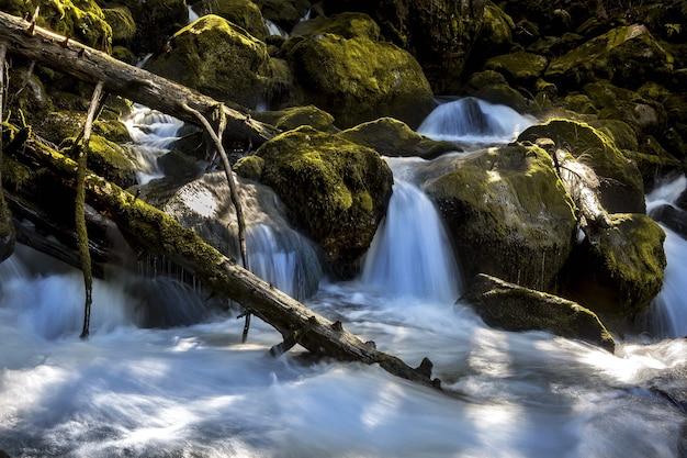 森の真ん中にある魅惑的な滝のローアングルショット 無料写真
