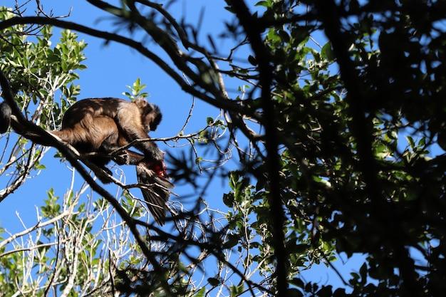 森の木の枝に鳥を狩る猿のローアングルショット 無料写真