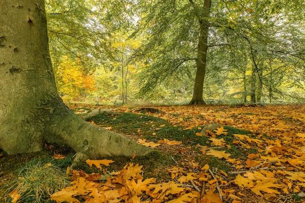 Снимок под низким углом парка, покрытого листьями, в окружении кустов и деревьев Бесплатные Фотографии