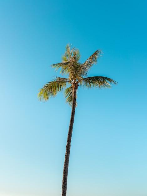 Снимок высокой пальмы под чистым небом под низким углом Бесплатные Фотографии