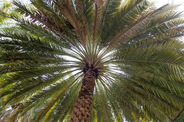 幅の広い背の高い緑のヤシの木のローアングルショット 無料写真