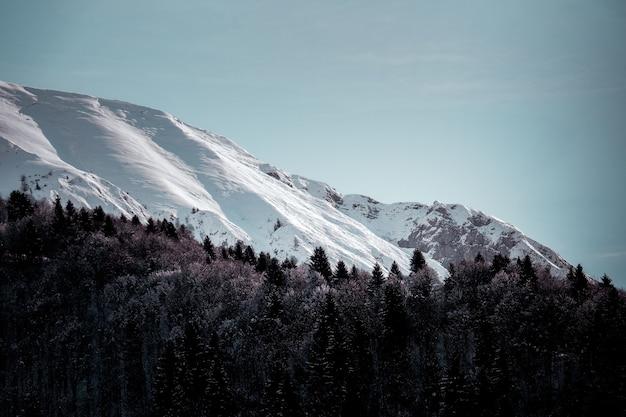 フォアグラウンドで高山の木が氷で覆われた山のローアングルショット 無料写真