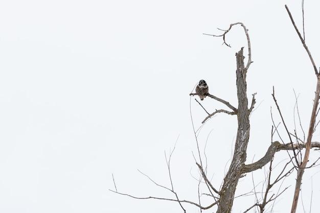 겨울에는 낮에 나뭇 가지에 올빼미의 낮은 각도 샷 무료 사진