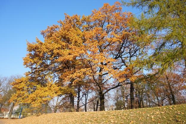 公園の澄んだ青い空を背景に黄色の葉と秋の木のローアングルショット 無料写真