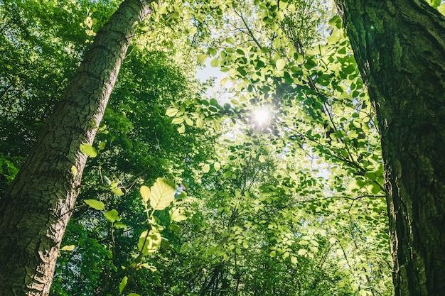 明るい空の下で美しい緑の葉の木のローアングルショット 無料写真