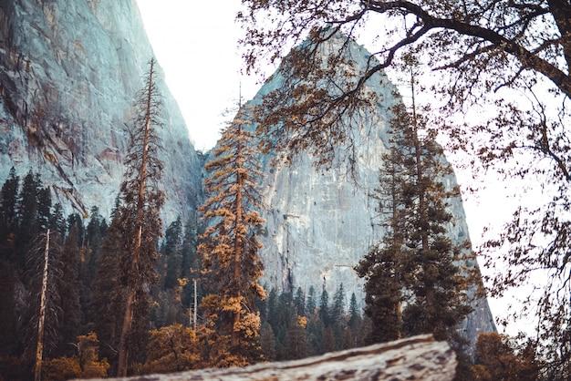 Низкий угол выстрела красивые пейзажи высоких скал за лесом и веткой дерева перед Бесплатные Фотографии