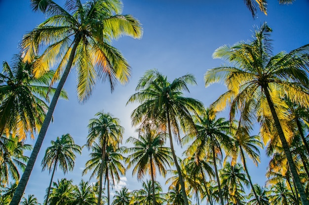 木々の間から太陽が輝いている青い空を背景にしたココナッツの木のローアングルショット 無料写真
