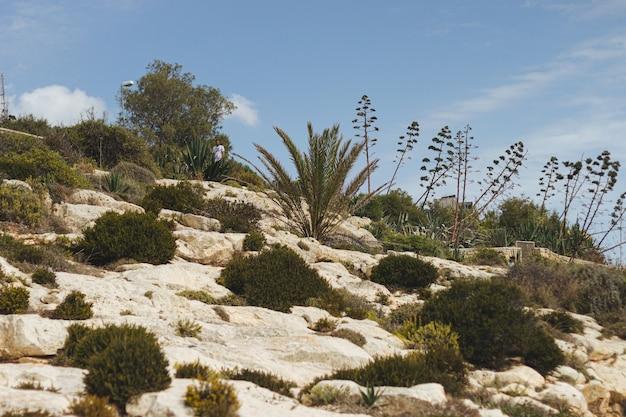 日光の下で岩にさまざまな植物のローアングルショット 無料写真