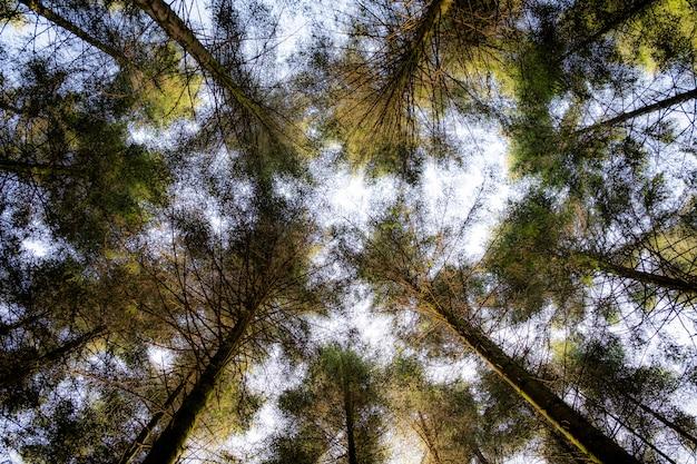 昼間の背景に白い空と緑の葉のある木のローアングルショット 無料写真