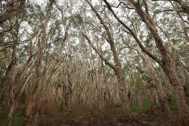 Снимок полуголых высоких деревьев в лесу под низким углом Бесплатные Фотографии