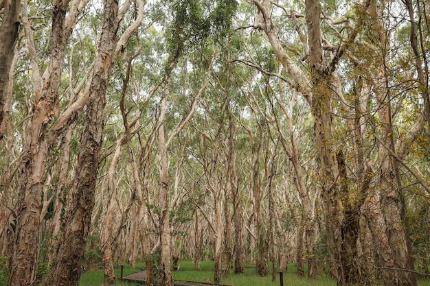 森の中の半裸の背の高い木のローアングルショット 無料写真