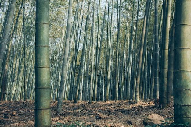 嵯峨野竹林のローアングル 無料写真