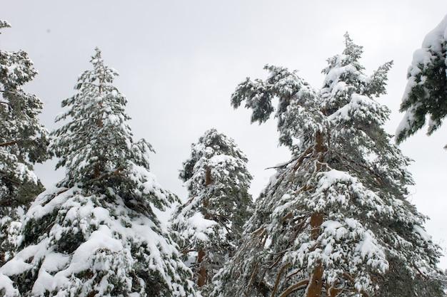 日中の野原で雪に覆われた背の高い木のローアングルショット 無料写真
