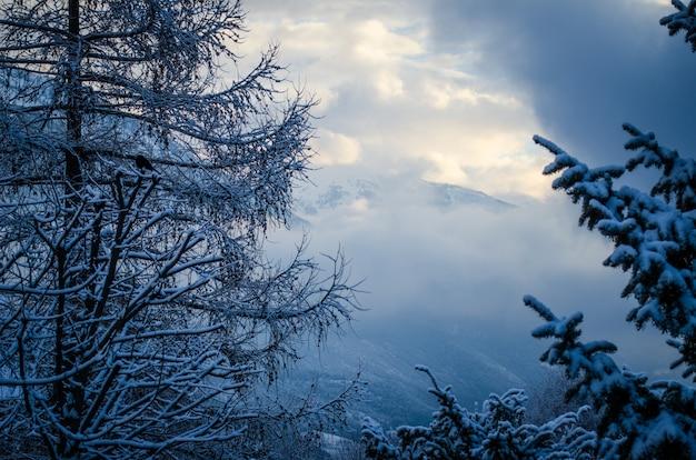 Низкий угол выстрела красивого зимнего неба над белым лесом в снегу Бесплатные Фотографии