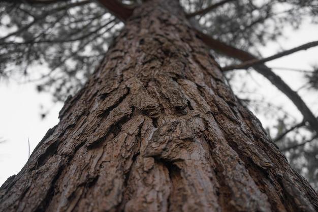 Снимок ствола старого дерева на фоне голубого неба. Бесплатные Фотографии