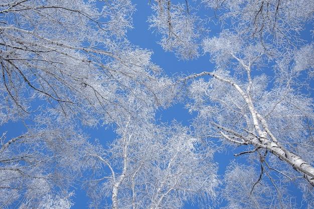 맑고 푸른 하늘에 눈으로 덮여 나무의 낮은 각도 샷 무료 사진