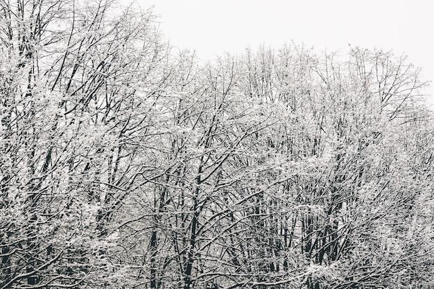 Inquadratura dal basso dei rami degli alberi completamente ricoperti di neve Foto Gratuite