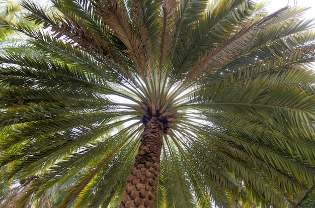Low angle shot of a wide tall green palm tree Free Photo
