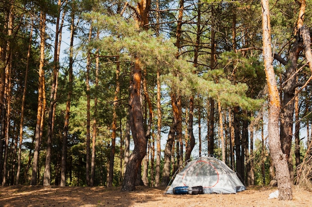 Low angle tent for camping in forest Free Photo