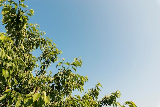 Foglie di alberi ad angolo basso Foto Gratuite