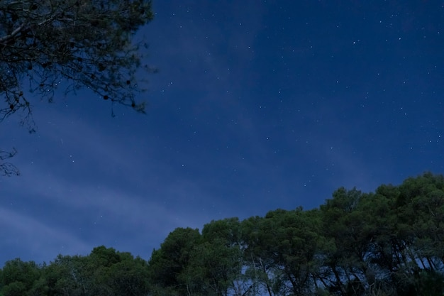 Low angle trees with night sky background Free Photo