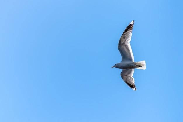 Низкий угол обзора летящей калифорнийской чайки под солнечным светом и голубым небом Бесплатные Фотографии
