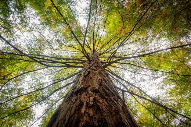 昼間の日光の下で緑の葉で覆われた木の低角度のビュー 無料写真