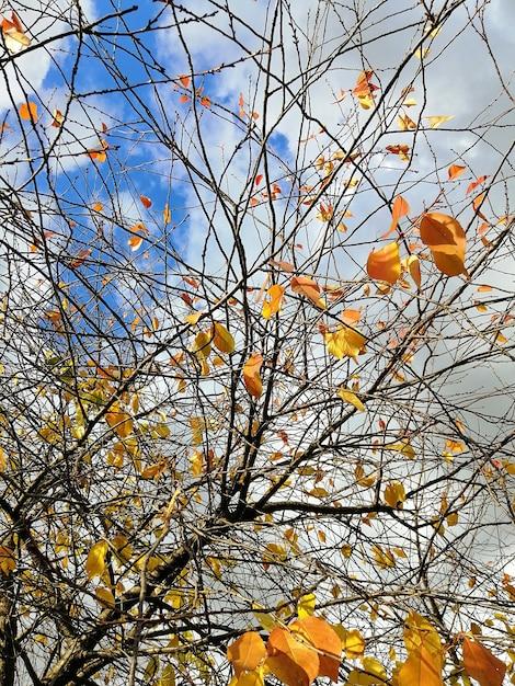 日光と曇り空の下で木の枝にカラフルな葉の低角度のビュー 無料写真