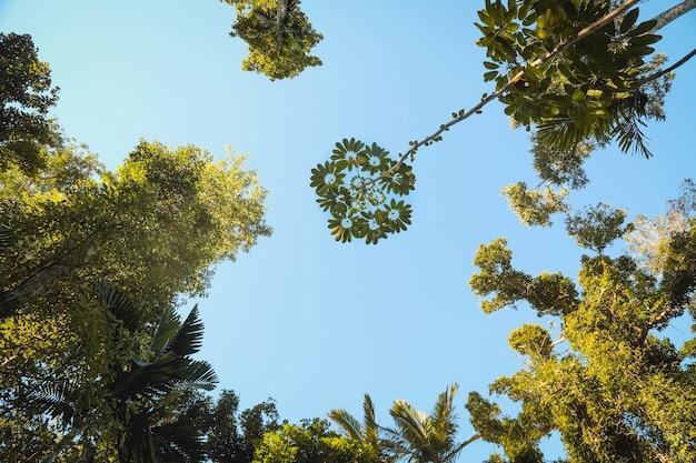 日光の下で庭の木の枝の葉の低角度のビュー 無料写真