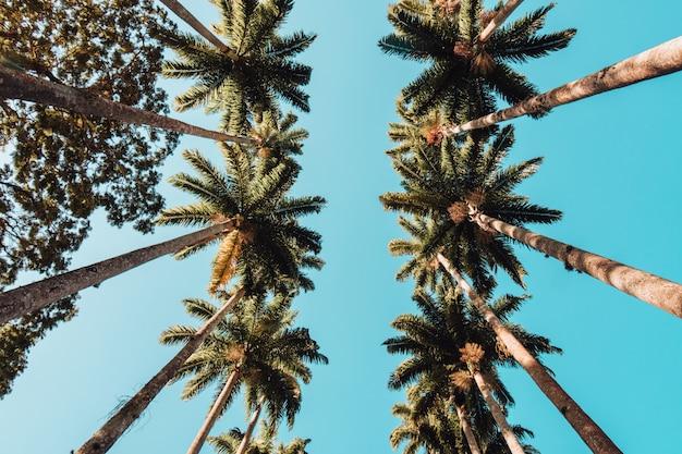 Низкий угол обзора пальм под солнечным светом и голубым небом в рио-де-жанейро Бесплатные Фотографии