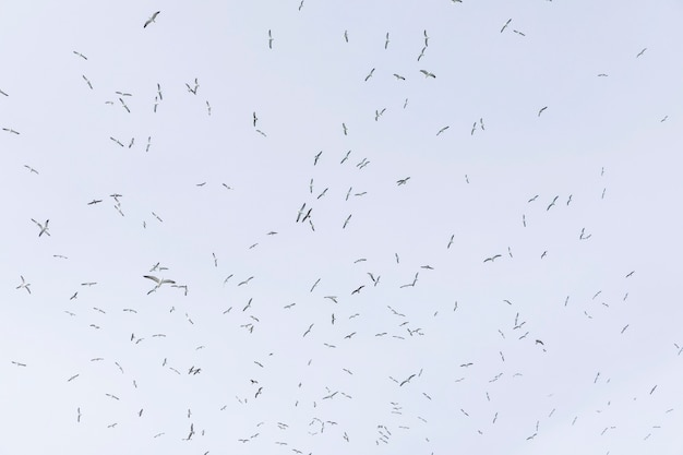 Low angle view of seagulls flying in sky Free Photo