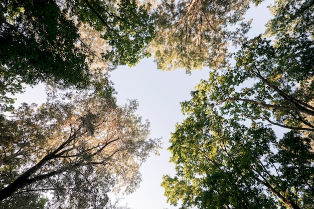 Low angle view of tree branches in park Free Photo