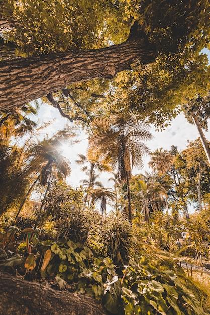 Низкий угол желтых деревьев в лесу в фуншале, мадейра, португалия Бесплатные Фотографии