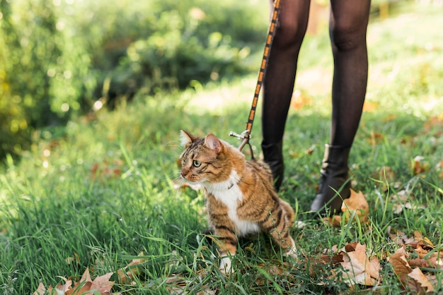 Low section of a woman walking with her cat Free Photo