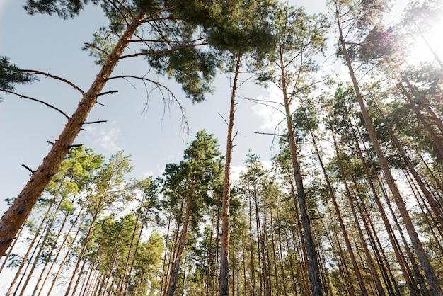 Деревья с плохим обзором при дневном свете Premium Фотографии