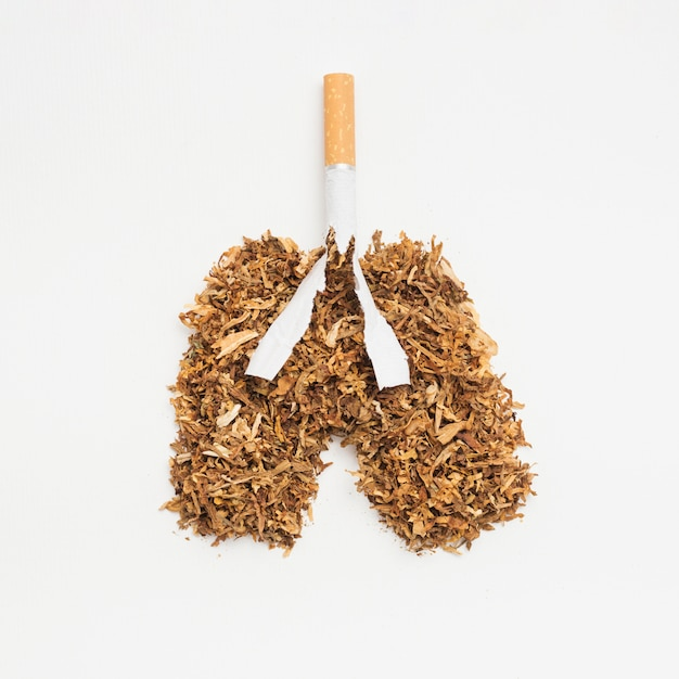 Lungs made from tobacco and cigarette on white backdrop Free Photo