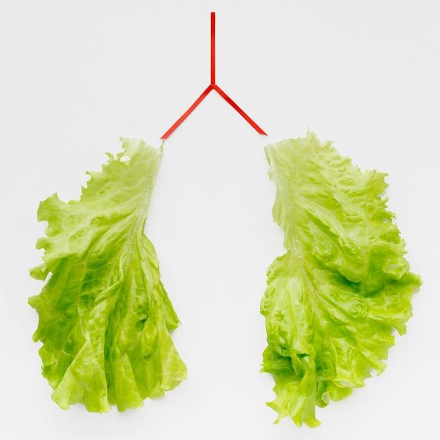 Легкие формы с зеленым салатом Бесплатные Фотографии