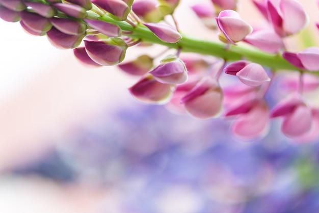 Lupines beautiful flowers on blurred bokeh background Premium Photo
