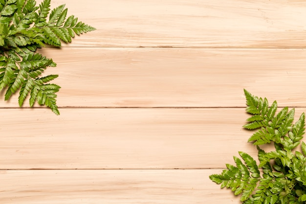 Lush green leaves of fern on wooden surface Free Photo