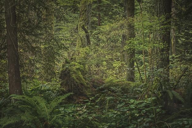 Lussureggiante foresta pluviale con piante, alberi e cespugli Foto Gratuite