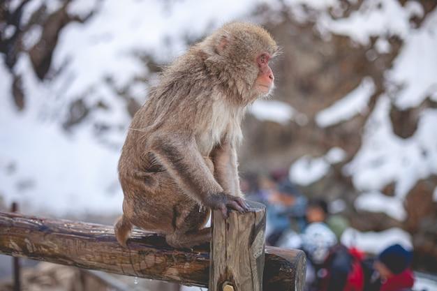 サルは木製のフェンスの上に立って 無料写真