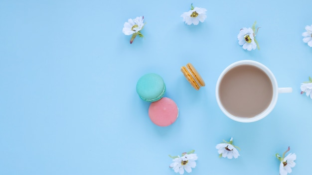 Macarons and  daisies Free Photo