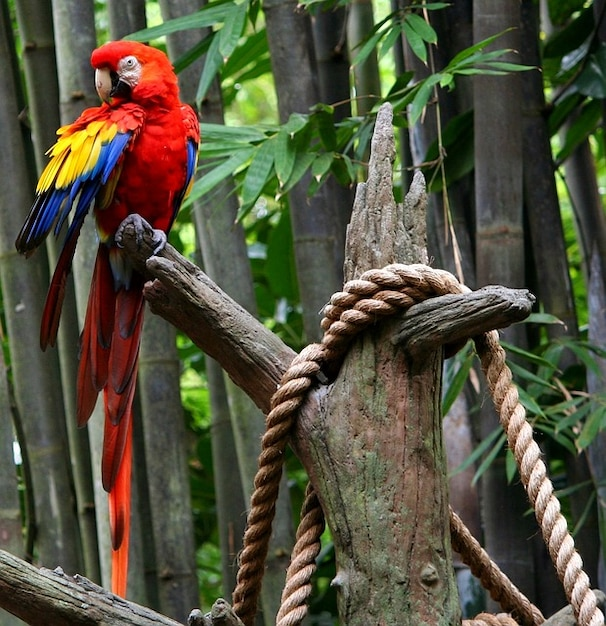 Macaw tropical feathers bird parrot brilliant Photo | Free ...