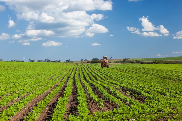 Machine working at peanut field under a blue sky. agriculture. Premium Photo