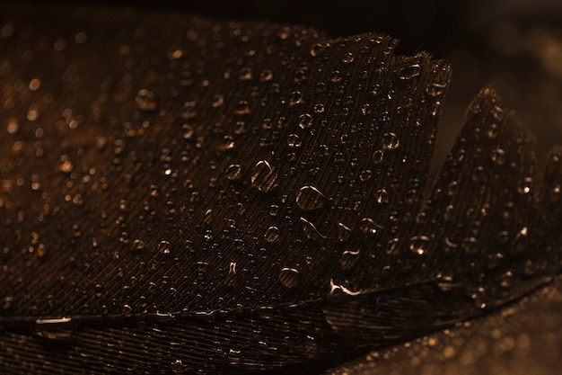 Macro of brown feather surface with transparent water drops Free Photo