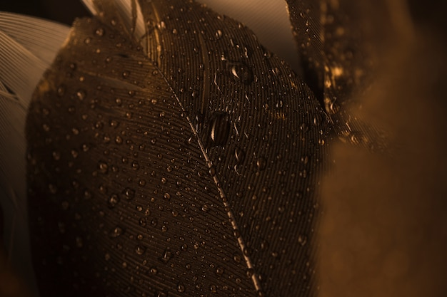 Macro close-up of a brown feather with droplets Free Photo