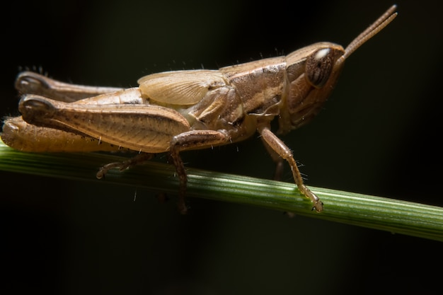 Macro grasshopper on leaf Photo | Premium Download