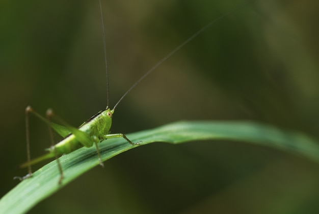 Macro of a grasshopper standing on a green leaf Free Photo