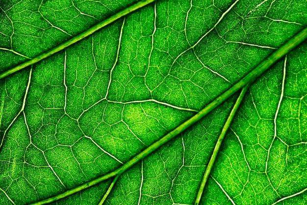 Macro di una foglia verde Foto Gratuite